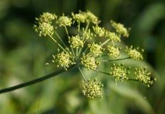 Plant. Stock Photo