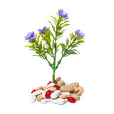 Plant and medicine Royalty Free Stock Photography
