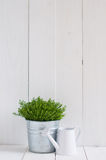 Plant in a metal pot and watering can Royalty Free Stock Image
