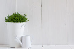 Plant in a metal pot and watering can Royalty Free Stock Photos