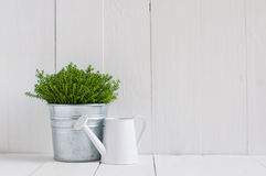 Plant in a metal pot and watering can Royalty Free Stock Photo