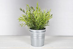 Plant with metal pot. stock photo