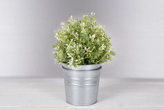 Plant with metal pot. stock image