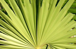 Plant Mexico. Plant in Mexico Royalty Free Stock Image