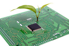 Plant and microchip. Nanotechnology, microelectronics,ecology conception. Close-up view of plant sprout on the circuit board with mounted microchip, taken on Stock Image