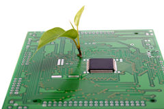 Plant and microchip. Nanotechnology, microelectronics,ecology conception. Close-up view of plant sprout on the circuit board with mounted microchip, taken on Stock Photography