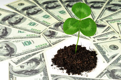 Plant in money Royalty Free Stock Photography