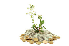 Plant and money Royalty Free Stock Image