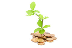 Plant and money Royalty Free Stock Images