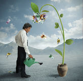 Plant of money Royalty Free Stock Image