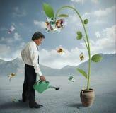 Plant of money royalty free stock image