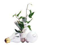 Plant and Money in Efficient Light Bulb Royalty Free Stock Photography