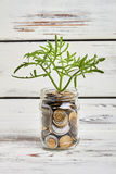 Plant and money in jar. stock photo