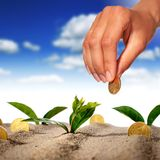 Plant and money. Royalty Free Stock Photos