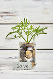 Plant and money on wood. Grow up your capital Stock Photography