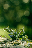 Plant at morning Royalty Free Stock Images