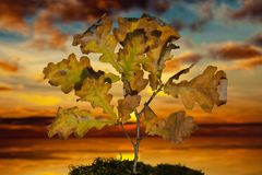 Small oak tree with leafs on moss at sunset. Plant on moss at sunset Royalty Free Stock Photography