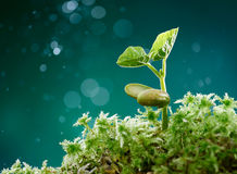 Plant with moss Stock Photo