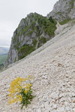 Plant on a mountain slope Royalty Free Stock Image