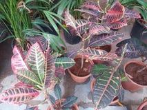 Plant. Nature beautiful nice good karotan stock image