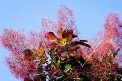 Plant, Nature, Flora, Sky royalty free stock photos