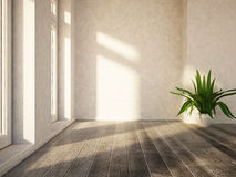 Plant near in the empty room Royalty Free Stock Photos