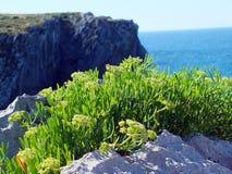 Plant near ocean Stock Photos