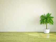 Plant near the wall Royalty Free Stock Photos