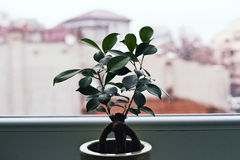 Plant near window Royalty Free Stock Images