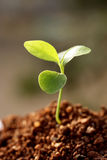 Plant -New life Royalty Free Stock Image
