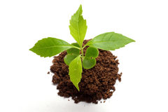 Plant-New life Royalty Free Stock Images