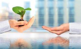 Plant. New life concept. Stock Photos