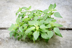 Plant new life. Ecology concept. Rising sprout on condrete ground Stock Photography