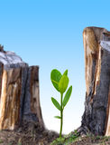 Plant new tree. To conserve environment Stock Images