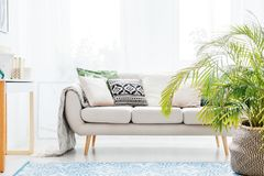 Plant in living room. Plant next to beige sofa with bright cushions in living room with blue carpet stock photo