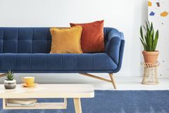 Plant next to blue couch with orange cushions in living room interior with wooden table. Real photo with blurred background. Concept stock image
