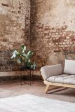 Plant next to grey sofa in industral room interior with carpet and red brick wall. Plant next to grey sofa in industrial room interior with carpet and red brick royalty free stock image