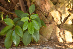 Plant next to a palm tree Royalty Free Stock Photography
