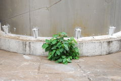 Plant next to the tank. This plant is growing up next to the water tank.this place is in paper factory Stock Photography