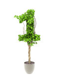 Plant number one Stock Image