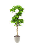 Plant number two Stock Photos
