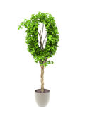 Plant number zero Royalty Free Stock Photos
