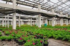 Plant nurseries Royalty Free Stock Image