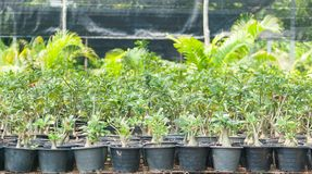 Plant nurseries Royalty Free Stock Images