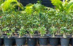 Plant nurseries Stock Photo