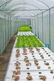 Plant nursery. Stock Image