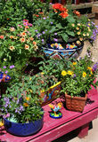 Plant nursery Stock Photos