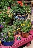 Plant nursery. Potted plants on nursery bench stock photos