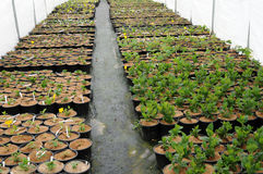 A plant nursery in Brittany Stock Photo