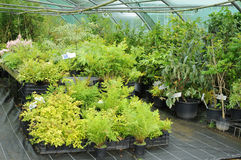 A plant nursery in Brittany Stock Photography